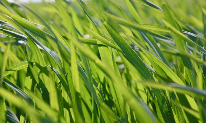 10 Gras im Wind