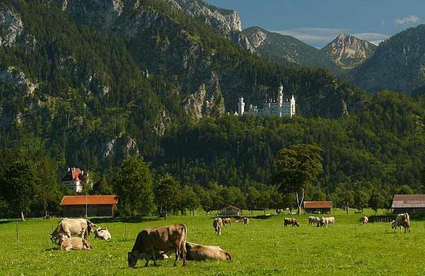 Schloßblick auf Schloss Neuschwanstein
