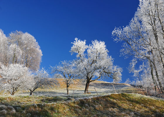 "Foto: Andreas Ender, photo-art+painting | Limited Edition of 99 | 50x70cm | je 144,00€ | Dezember - ""Winter Wonderland"""