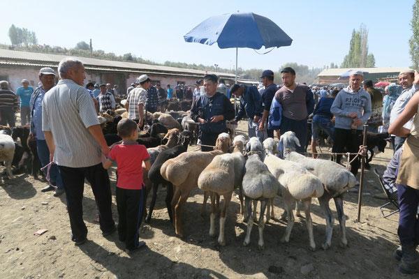 Les moutons aux fesses bien dodues