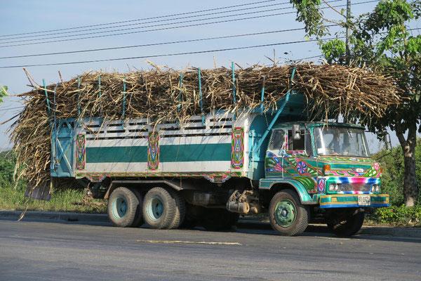C'est la période de récolte des cannes à sucre