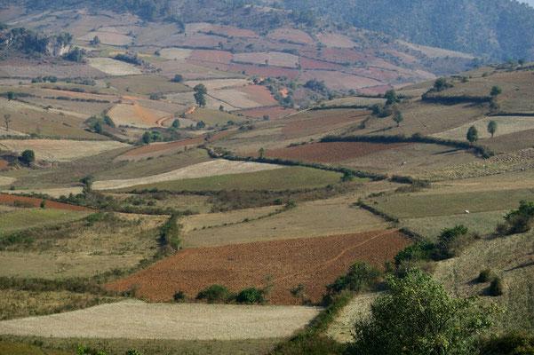 Les parcelles sont souvent petites pour maîtriser l'irrigation