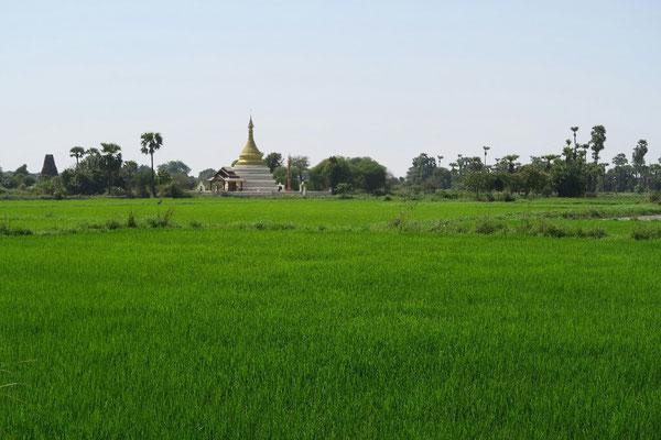 Les rizières d'Inwa