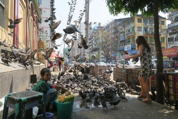 Des pigeons!