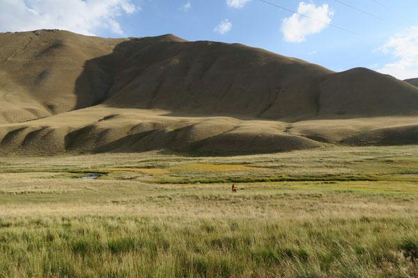 Nico au milieu des hautes herbes