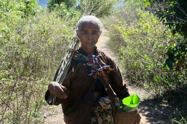 Sur le plateau des Bolovens - Laos