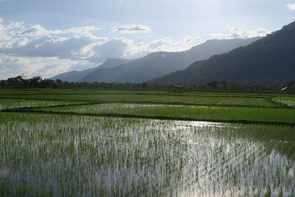 Les belles rizières!!
