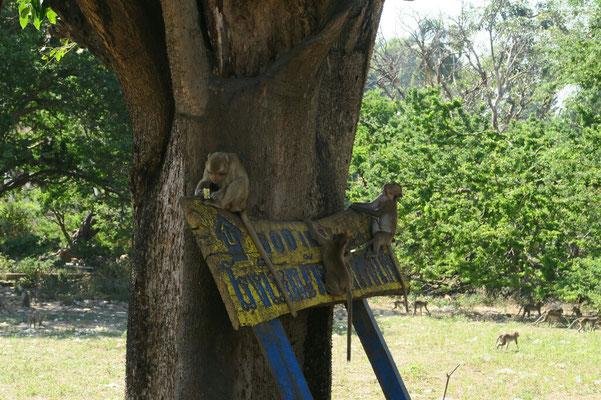 Monkey temple... On retrouve des singes un peu partout!