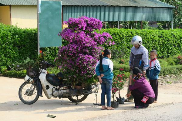 Fleuriste ambulant