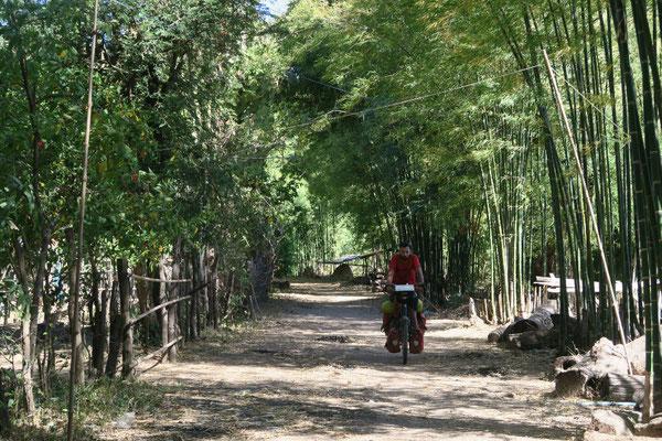Il est bien agréable de pédaler à l'ombre des bambous!