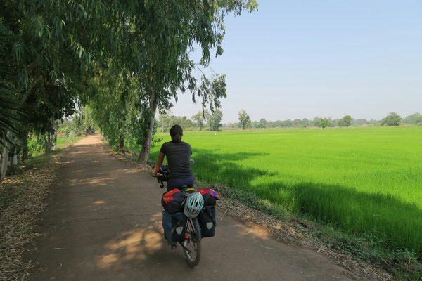Encore et toujours de magnifiques rizières