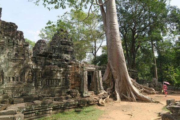 Les temples envahis par la végétation