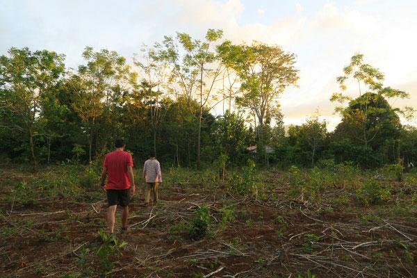 Ballade dans la plantation de Me Vieng (ici, dans un champs de manioc)