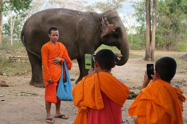 ... ou les éléphants!
