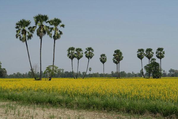 Campagnes à l'approche de Sukhothai