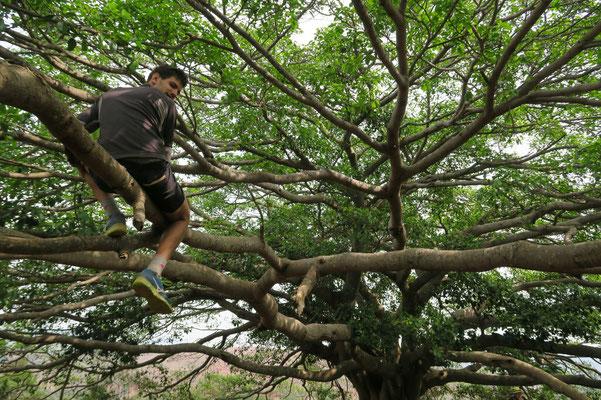 Antoine grimpe sur les Banian