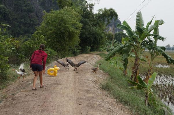 ... et même les oies - Baie d'Halong terrestre, Vietnam