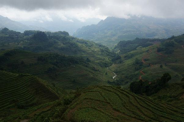 En prenant de l'altitude, les cultures en terrasses remplacent les champs d'ananas