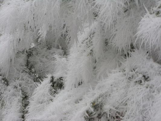 délices givrés de décembre sur la montagne d'Asté