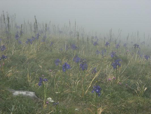 Le brouillard est la coquetterie du soleil - Forneret -