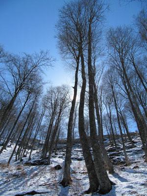 """La forêt de """"Gargamel"""" en avril"""