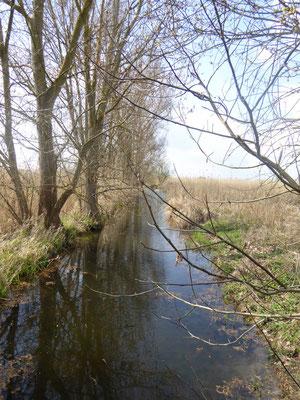 Scheidgraben im Datterbruch, Groß-Gerau / Dornheim