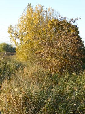 Herbststimmung, Datterbruch, Groß-Gerau / Dornheim