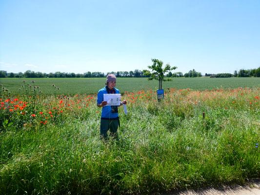 Charline gibt Infos zu den Wildbienen und anderen Bewohnern