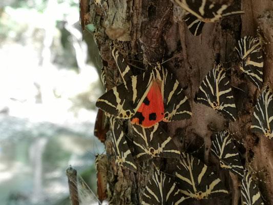 Schmetterlingstal