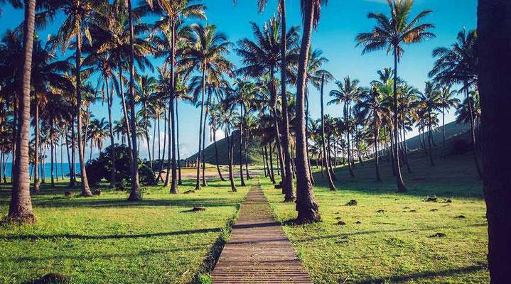Palmen am Anakena-Strand