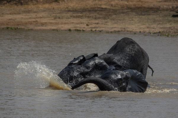 Jeux d'eau, éléphants d'Afrique