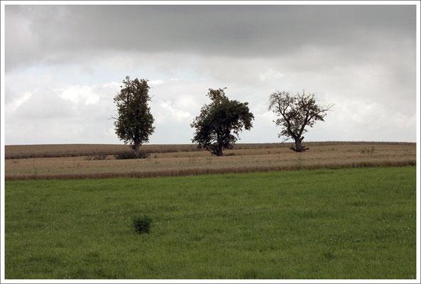 Berkach | Thüringen