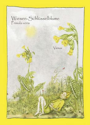 Kräuterkarte_Wiesenschlüsselblume_Primula veris © Britta Jessen