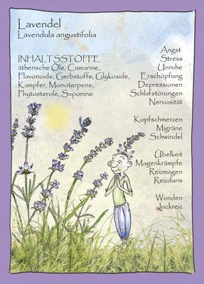 Kräuterkarte_Lavendel_Lavendula angustifolia © Britta Jessen