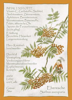 Kräuterkarte_Eberesche_Sorbus aucuparia © Britta Jessen