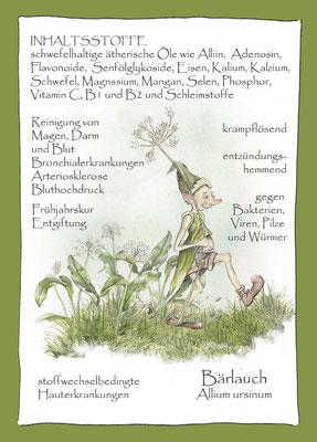 Kräuterkarte_Bärtlauch_Allium ursinum_Artemesia vulgaris © Britta Jessen