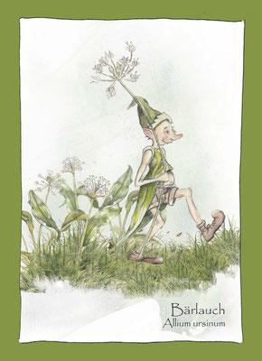 Kräuterkarte_Bärlauch_Allium ursinum © Britta Jessen
