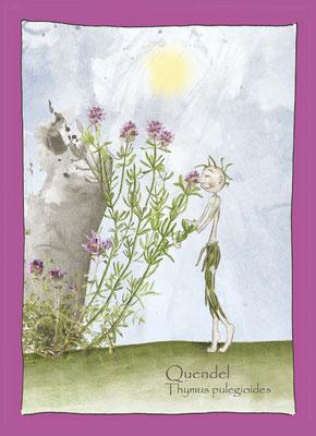 Kräuterkarte_Quendes_Thymus pulegioides © Britta Jessen