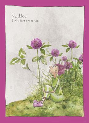 Kräuterkarte_Rotklee_Trifolium pratense © Britta Jessen