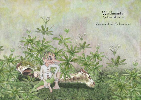 Tischset Waldmeister