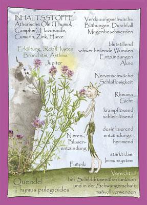 Kräuterkarte_Quendel_Thymus polegeoides © Britta Jessen