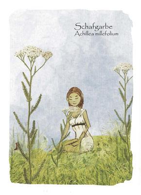 Kräuterkarte_Schafgarbe_Achillea millefolium © Britta Jessen