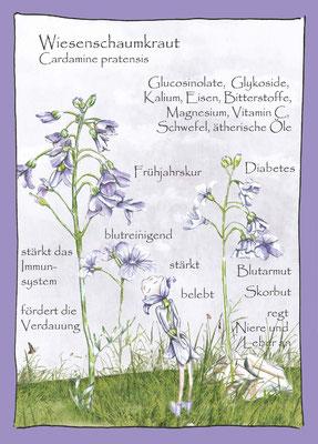 Kräuterkarte_Wiesenschaumkraut_Cardamine pratensis © Britta Jessen
