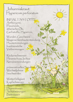 Kräuterkarte_Jojanniskraut_Hypericum perforatum © Britta Jessen