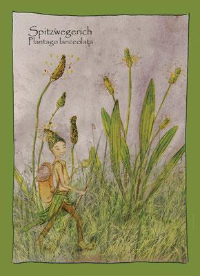 Kräuterkarte_Sitzwegerich_Plantago lanceolata © Britta Jessen