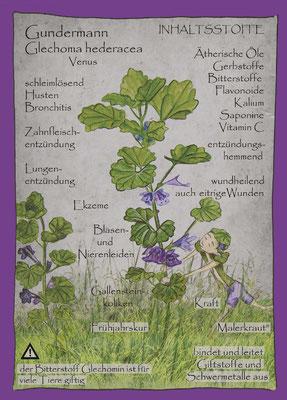 Kräuterkarte_Gundelrebe/ Gundermann _Glechoma hederacea © Britta Jessen