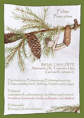 Kräuterkarte_Fichte_Picea abis © Britta Jessen