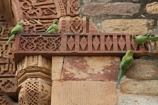 perruches sur le Qutub Minar à Delhi