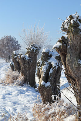 Winter landschap is net zo mooi!