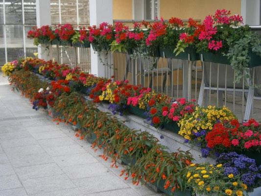 unser Balkon 2014 - frisch gepflanze